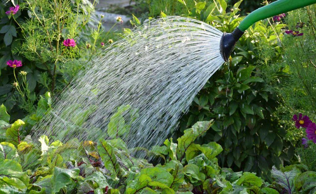nursery watering